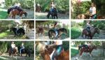 Pony_Pie
